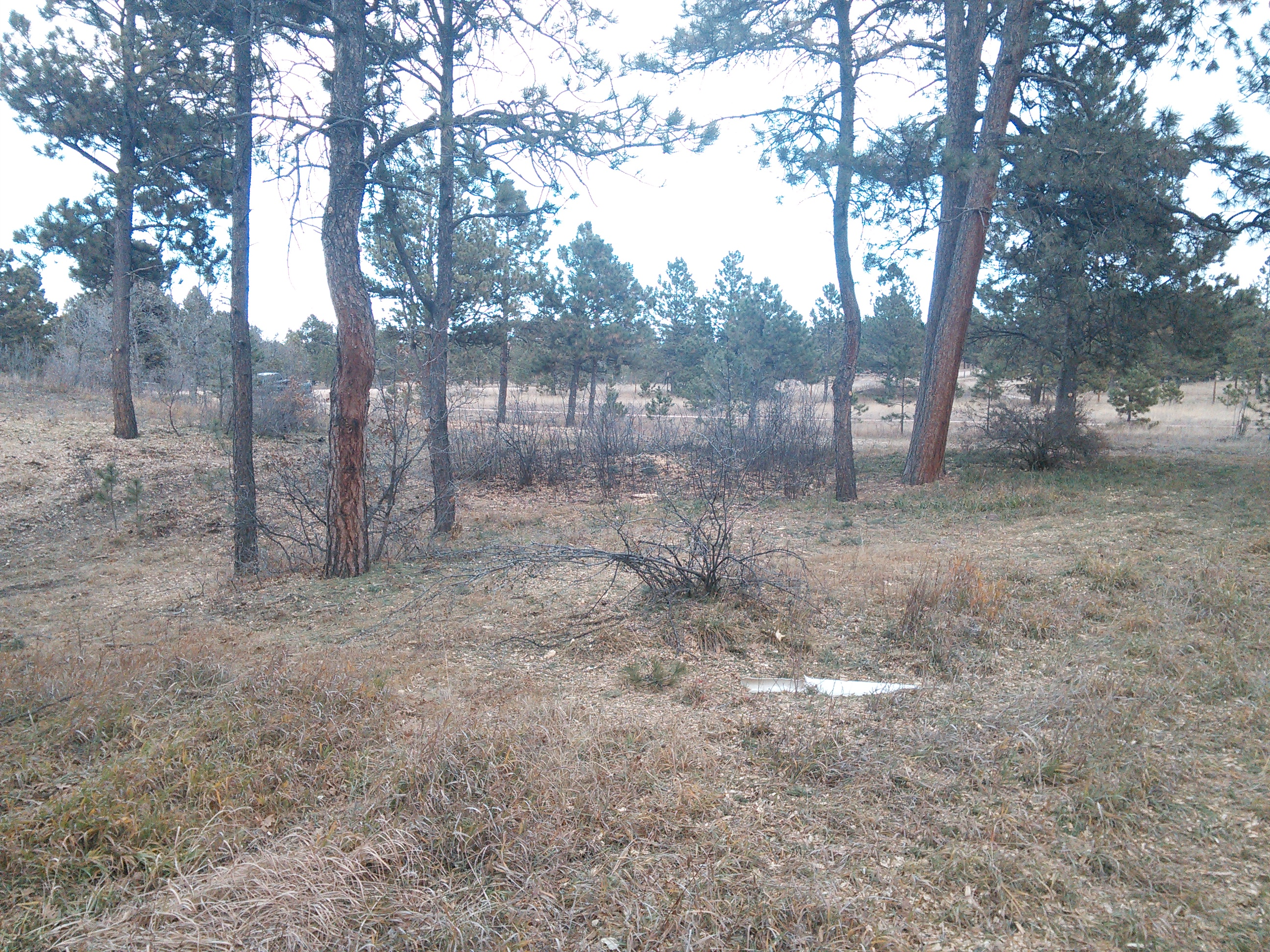 Cleaned Up Monument, Colorado Area Lot