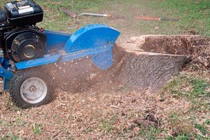 Stump-Grinding-Colorado-Springs-Tree-Service