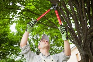 Tree-Pruning-Colorado-Springs-Colorado-Shears-Clippers